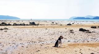 Blacky - Port Barton