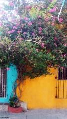 Les couleurs de Carthagènes