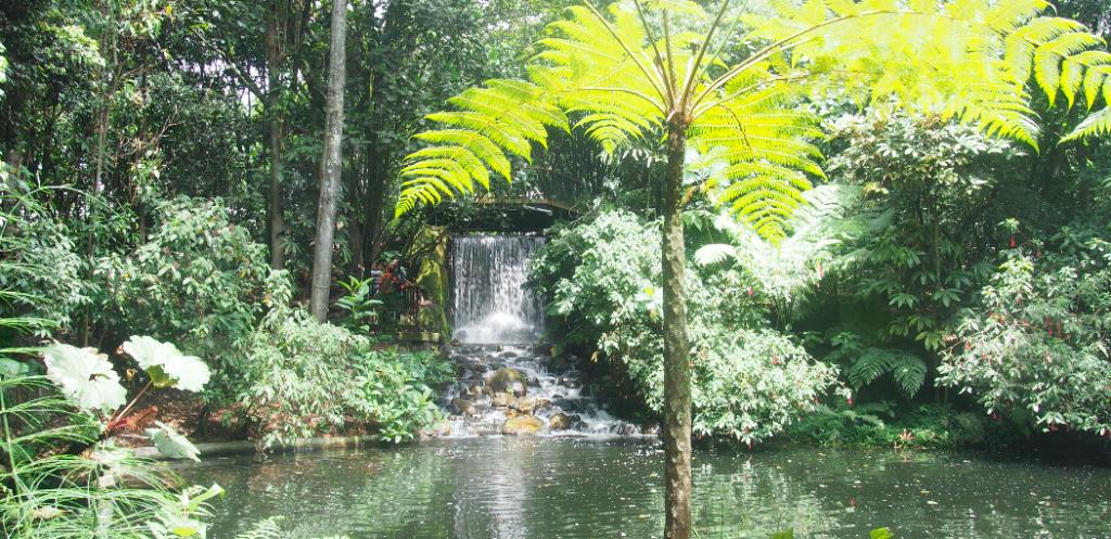 jardin botanique bogota