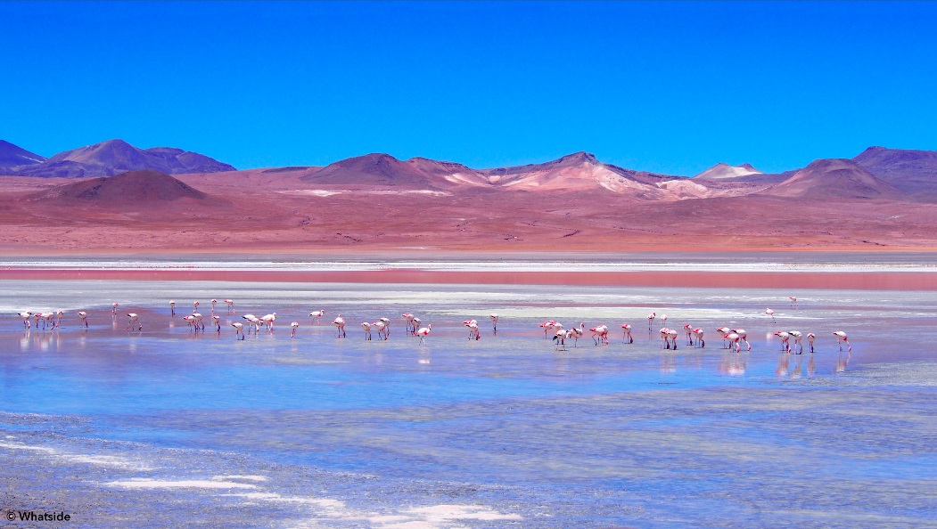 Les flamants roses de la Laguna Colorado Sud Lipez