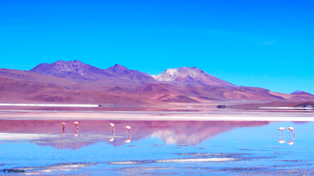 Laguna Colorado avec flamants rose Sud Lipez