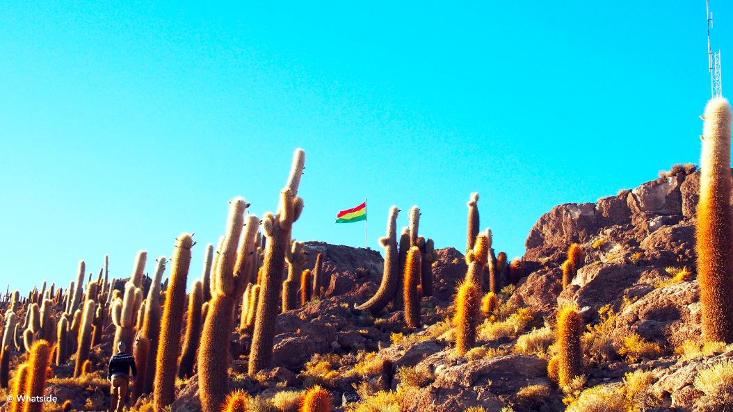 Île des cactus dans le Salar de Uyuni
