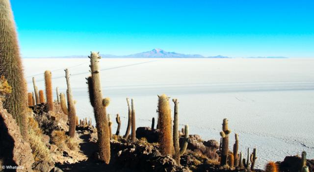 Le Salar d'Uyuni et les cactus de son île d'incahuasi