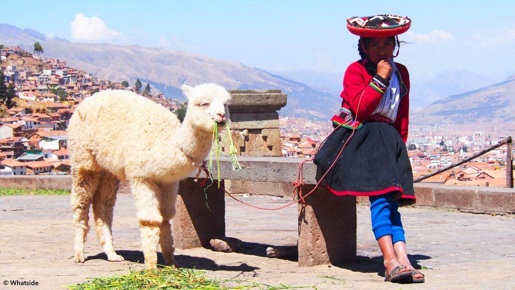 sommet de cuzco lama montagne